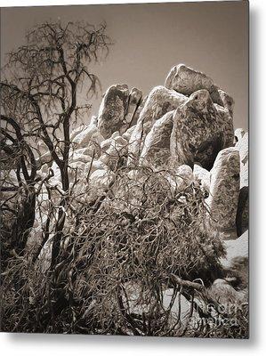 Joshua Tree - 07 Metal Print by Gregory Dyer