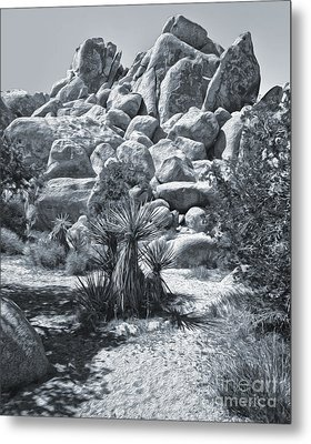 Joshua Tree - 09 Metal Print by Gregory Dyer