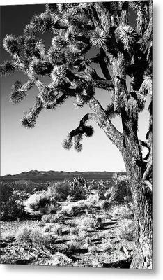 Joshua Tree Bw Metal Print by John Rizzuto