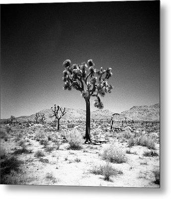 Joshua Tree Holga 1 Metal Print by Alex Snay