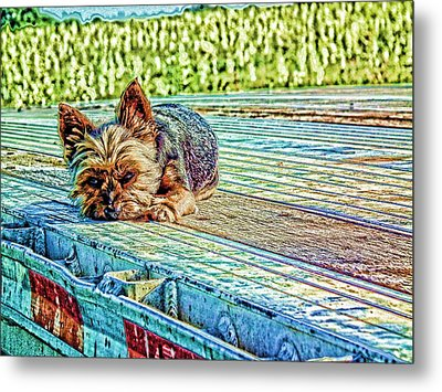 Metal Print featuring the photograph 'jovie' Truckin Dog's Need Breaks Too by Robert Rhoads