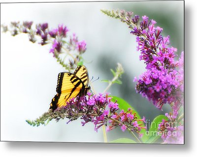 Joy Of Summer Metal Print by Lila Fisher-Wenzel