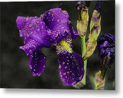 Floral Tears Metal Print by Renee Anderson