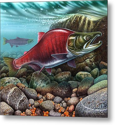 Jqw Sockeye Salmon  Metal Print by Jon Q Wright