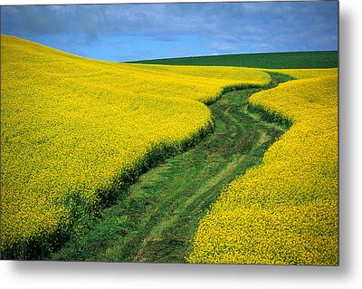July Canola Metal Print by Latah Trail Foundation