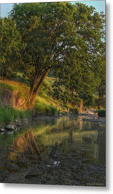 July Morning Along The Creek Metal Print by Bruce Morrison