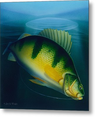 Jumbo Perch Ice Fishing Metal Print