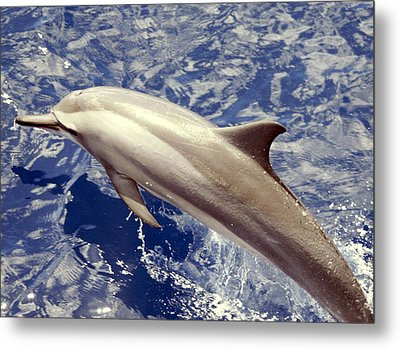 Jump For Joy Metal Print by Paula Marie deBaleau