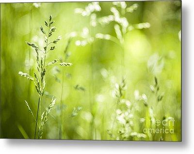 June Grass Flowering Metal Print by Elena Elisseeva