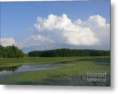 June Reservoir Metal Print by Betsy Cotton