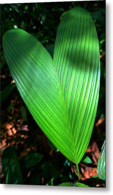 Jungle Heart Metal Print