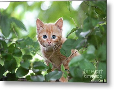 Jungle Kitty Metal Print by Debbie Green