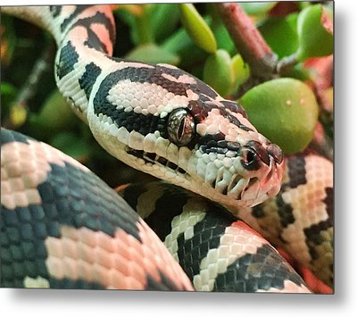 Jungle Python Metal Print