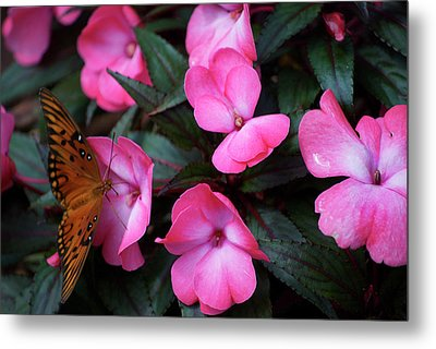 Metal Print featuring the photograph Just A Small Taste For This Butterfly by Thomas Woolworth