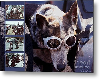 Just Call Me Dog Metal Print by Linda Lees