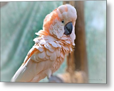 Just Call Me Fluffy Metal Print by Tara Potts