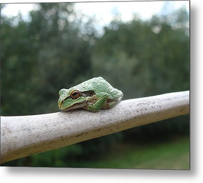 Metal Print featuring the photograph Just Chillin' by Cheryl Hoyle