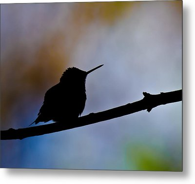 Metal Print featuring the photograph Just Chillin by Robert L Jackson