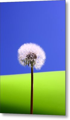 Metal Print featuring the photograph Just Dandy by Paula Brown