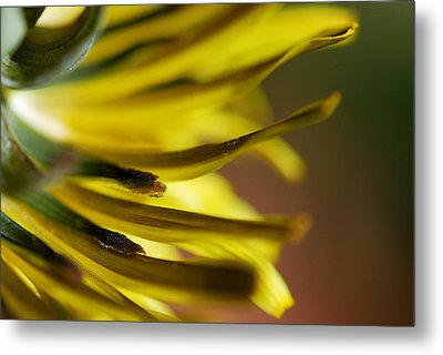 Metal Print featuring the photograph Just Dandy by Wendy Wilton