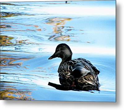Just Ducky Metal Print by Colleen Kammerer