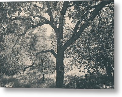Just Hold On Metal Print by Laurie Search