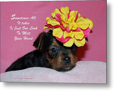 Just One Look Metal Print by Lorna Rogers Photography