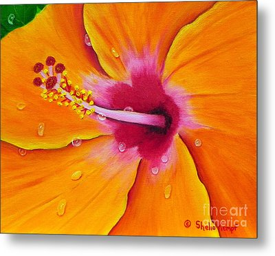 Metal Print featuring the painting Just Peachy - Hibiscus Flower  by Shelia Kempf