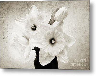 Just Plain Daffy 1 B W - Flora - Spring - Daffodil - Narcissus - Jonquil Metal Print by Andee Design