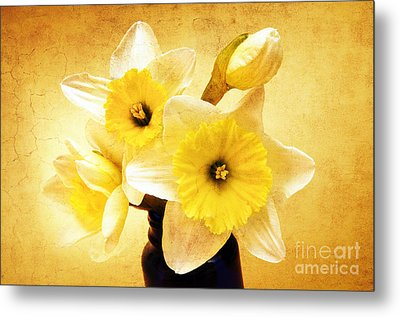 Just Plain Daffy 1 - Flora - Spring - Daffodil - Narcissus - Jonquil Metal Print by Andee Design