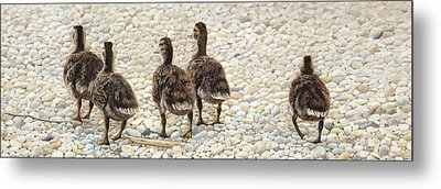 Just Waddling Metal Print by Tammy  Taylor