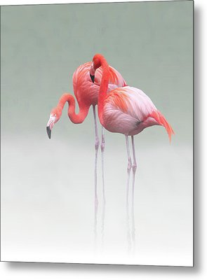 Just We Two ... Metal Print by Anna Cseresnjes