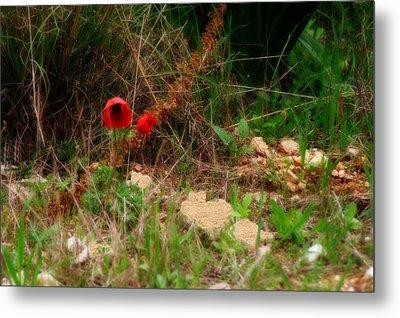 Kalanit Flower- Red Anemone - Series Iv Metal Print