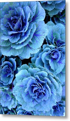 Kale Metal Print by Laurie Perry