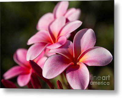Kaupo Summer Treasure Metal Print by Sharon Mau