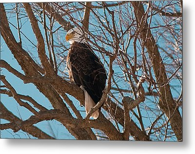 Keeping Watch Metal Print