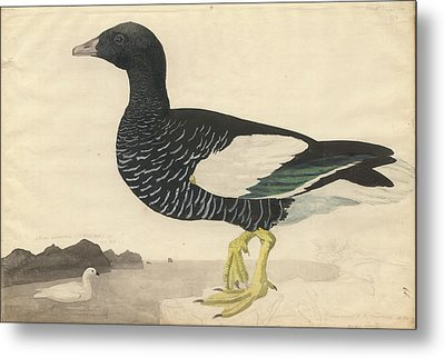 Kelp Goose Metal Print by Natural History Museum, London