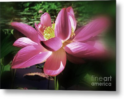 Metal Print featuring the photograph Kenilworth Garden Three by John S