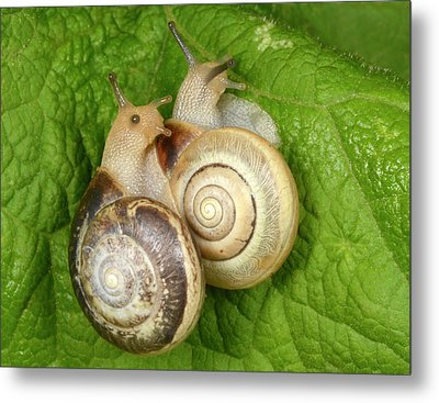 Kentish Snails Metal Print