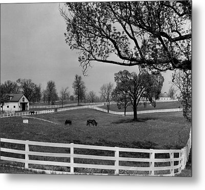 Kentucky Bluegrass Horse Racing Farm Metal Print by Retro Images Archive