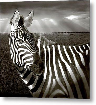 Kenya Black & White Of Zebra And Plain Metal Print by Jaynes Gallery