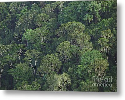 Kenyan Forest Metal Print by Art Wolfe