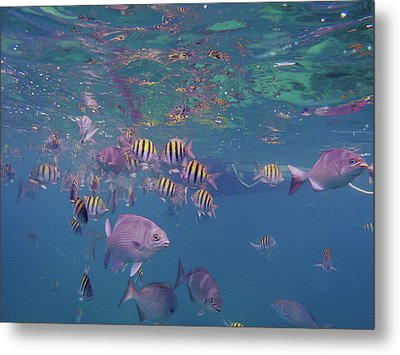 Keys Reef Metal Print by Carey Chen
