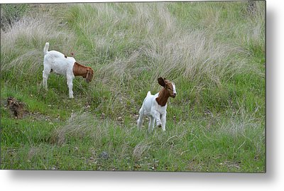 Kids At Play Metal Print by Lynn Bauer