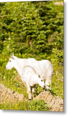 Kids In Glacier 4 Metal Print by Natural Focal Point Photography