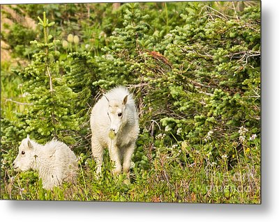 Kids In Glacier Np 3 Metal Print by Natural Focal Point Photography