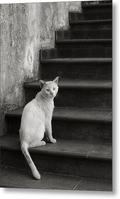 Metal Print featuring the photograph Kimba by Laura Melis