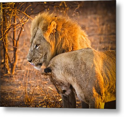 King And Queen Metal Print by Adam Romanowicz