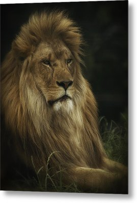 Metal Print featuring the photograph King by Chris Boulton