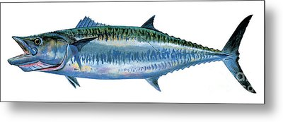 King Mackerel Metal Print by Carey Chen